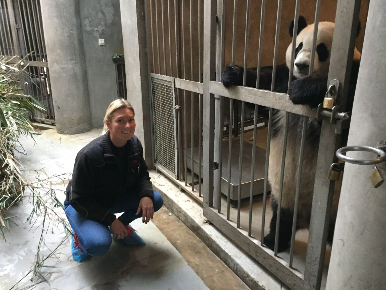Anita Haupt Holm, who is responsible for feeding the animals at Copenhagen Zoo, has developed a new method of thawing bamboo shoots that the giant pandas have accepted.