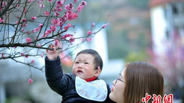 Plum blossoms and the warm sunshine drew large crowds in Sizhou Town, Jiangxi Province on February 14 ahead of Chinese New Year.
