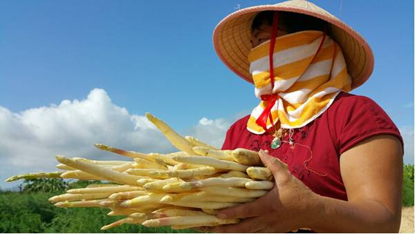China's white asparagus: the buried treasure of the vegetable world