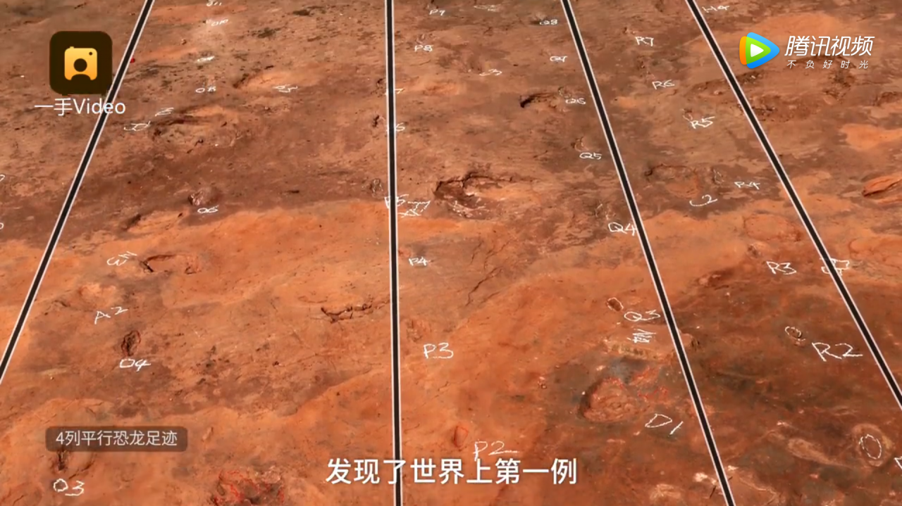 Dinosaur footprints found in China reveal that feathered dromaeosaurid lived in groups