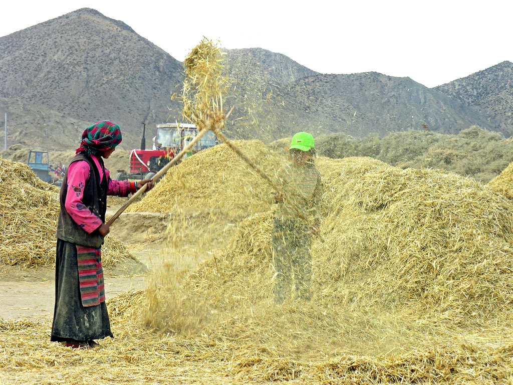 China to be self-sufficient in grain by 2035, says report