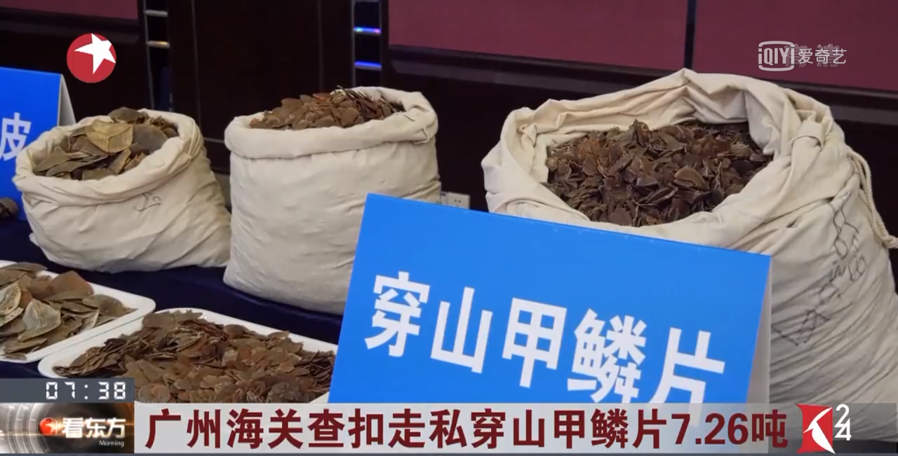 Over 7 tonnes of pangolin scales seized in south China