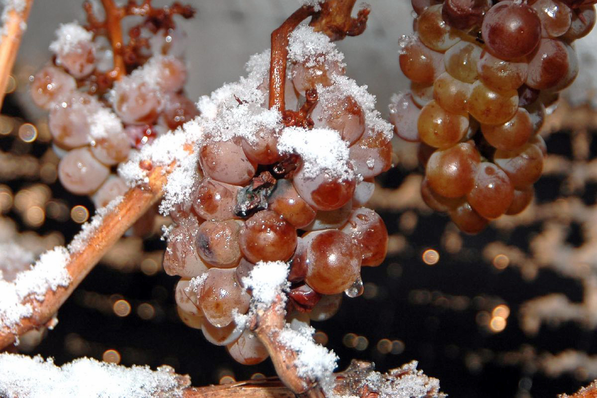 China has been the top importer of Canadian ice wine for the past few years, with demand growing from 103,565 litres in 2013 to 150,536 in 2017.