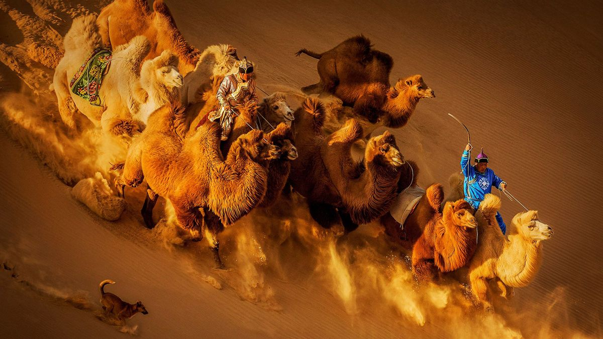 "Chinese photographer Hu Weiguo won second prize in the General Color category at the 2018 Siena International Photo Awards for the photo ""Camels in the Desert"". The picture was taken in Inner Mongolia."