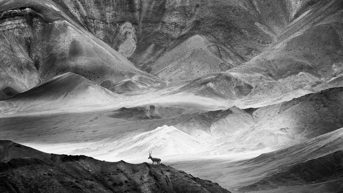 "Chinese photographer Chen Lin received a remarkable award in the General Monochrome category at the 2018 Siena International Photo Awards for the photo ""Desert Elf""."