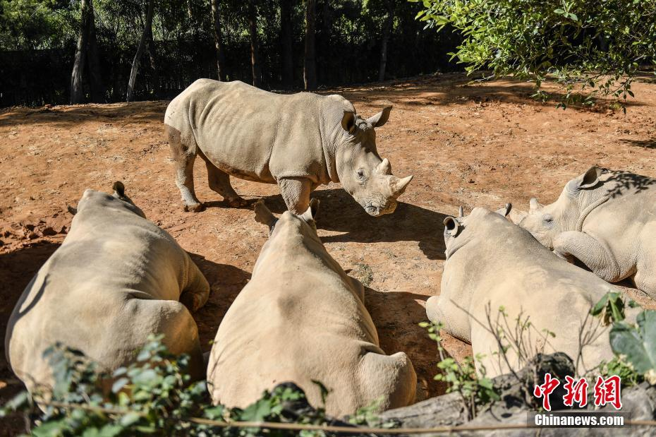 China postpones decision on tiger and rhino horn trading