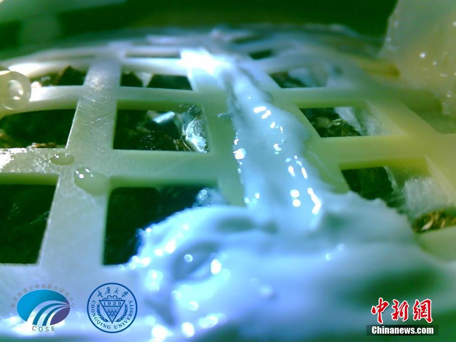 Cotton seed carried by China's Chang'e-4 probe sprouts on moon