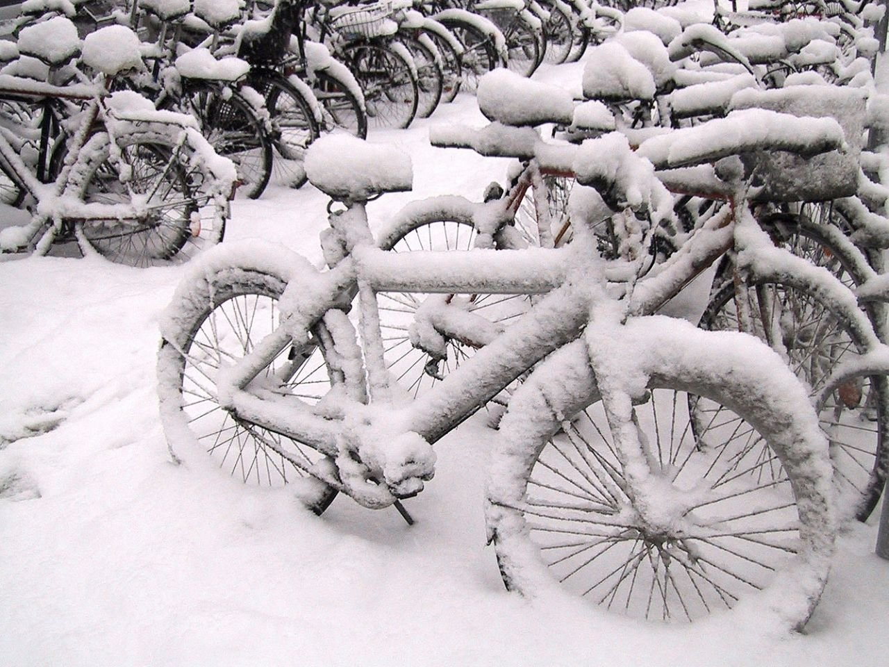 90 percent of Danes own a bicycle.