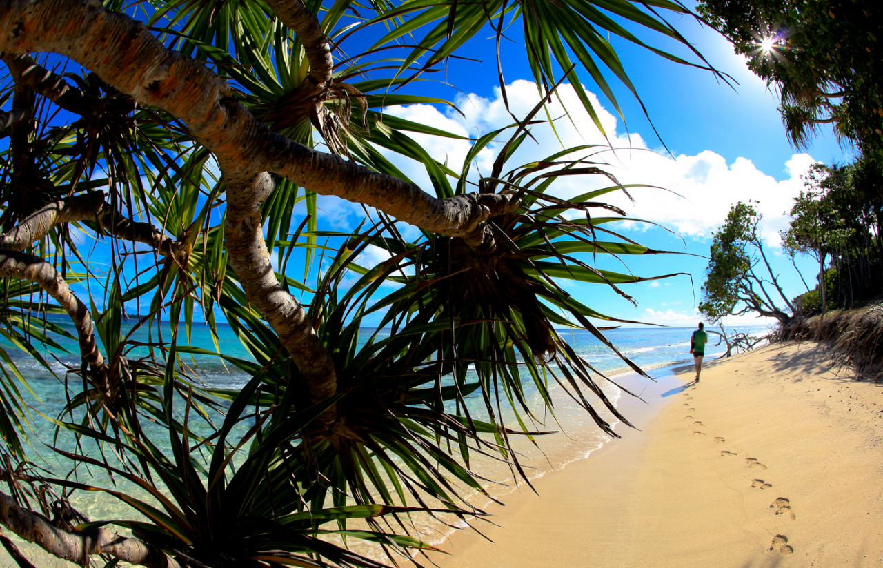Turquoise sea, palm trees and endless beaches look like a paradise on earth for many.