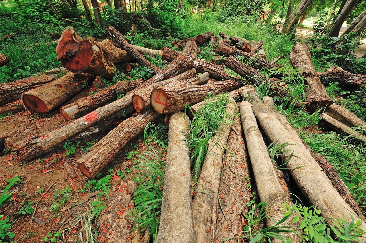 deforestation a real threatening danger Natural disasters & assessing hazards and risk deforestation leading to of life should be altered to deal with the danger imposed by.