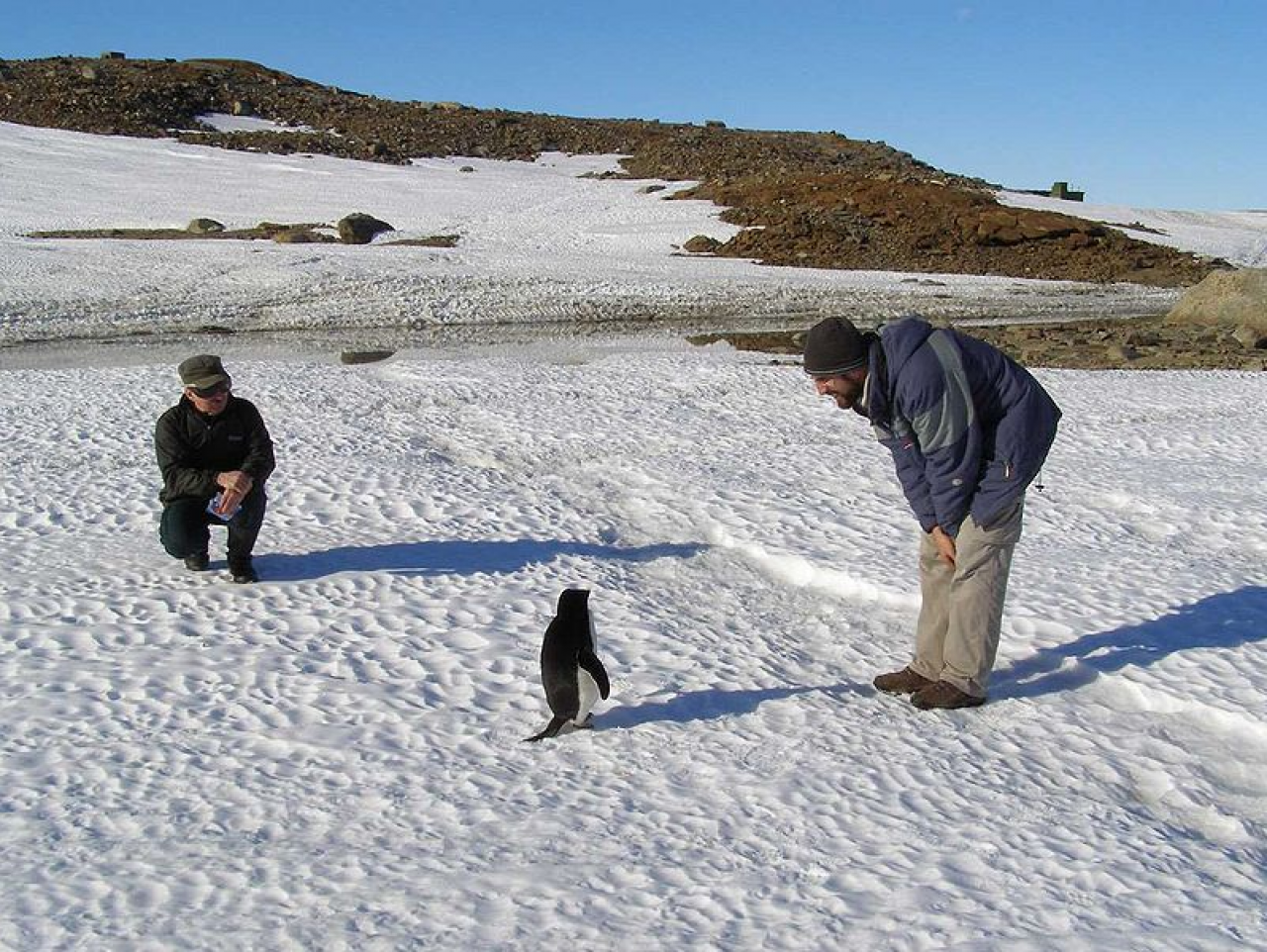Researchers meeting some penguins.