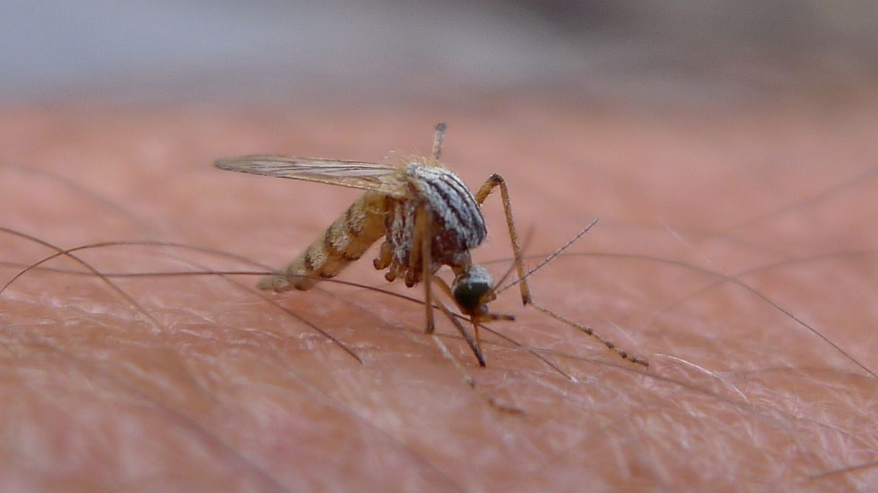 Nine facts about mosquitoes, Earth's deadliest animal