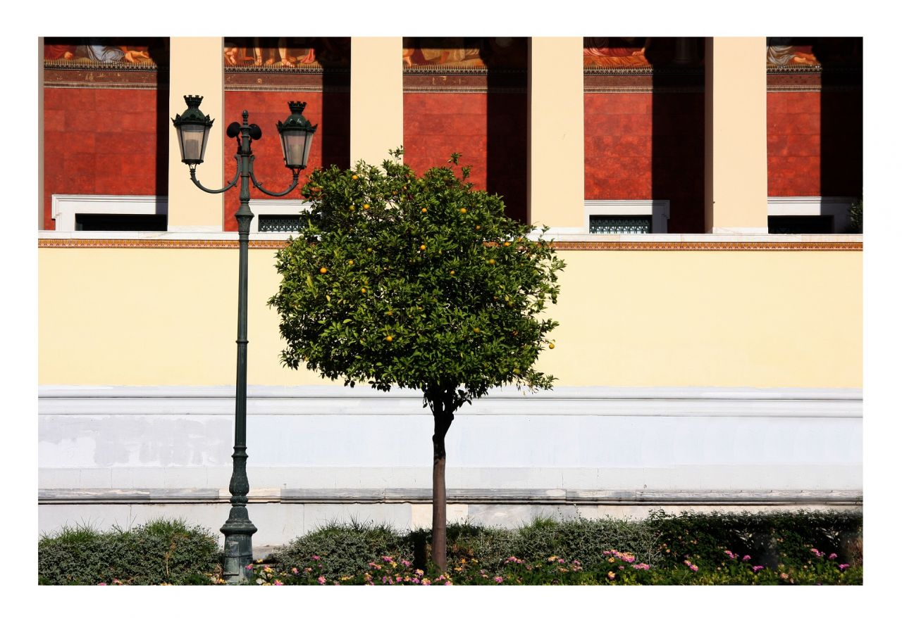 Athenian trademark trees are Asian immigrants