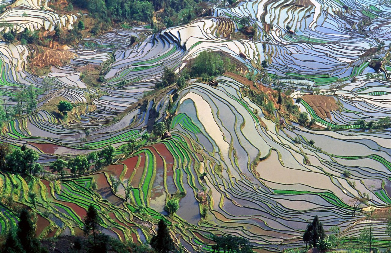 Honghe Hani Rice Terraces.