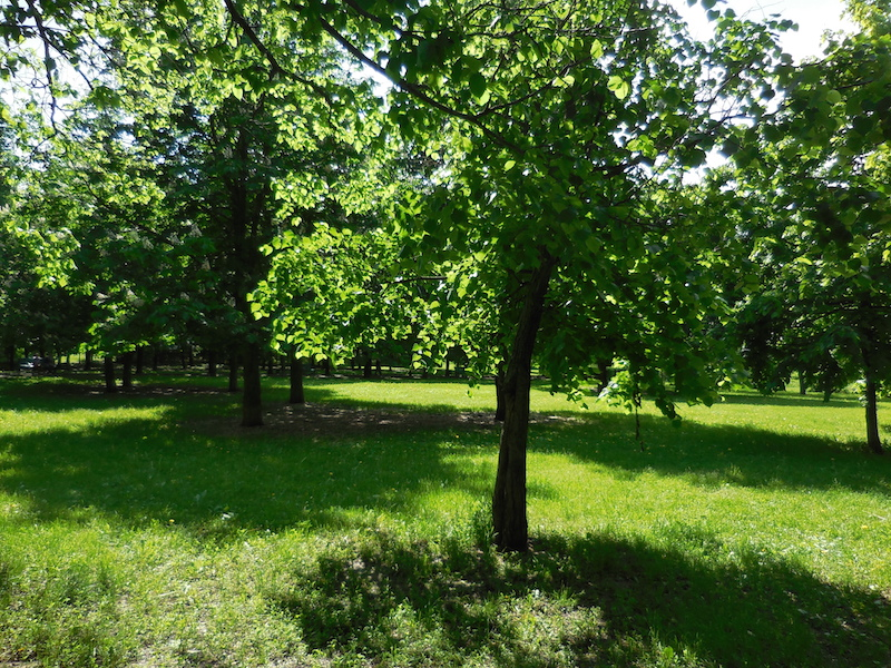 Summertime, when the grass is green in the park in Chertanovo district in the south of Moscow