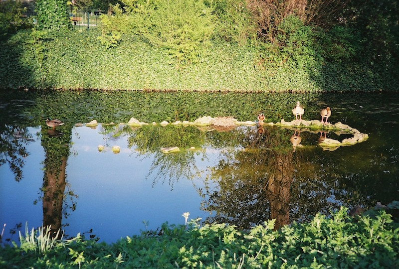The reflection of the blue sky on a crystal pond in Lloyd Park in south London