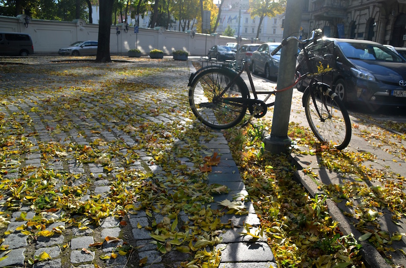 One of the last sunny autumn days for biking?