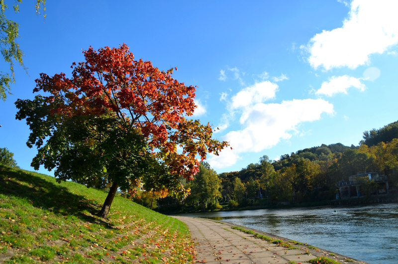 Locals claim that this is the most colourful tree, situated on the banks of the River Neris, in all of Vilnius