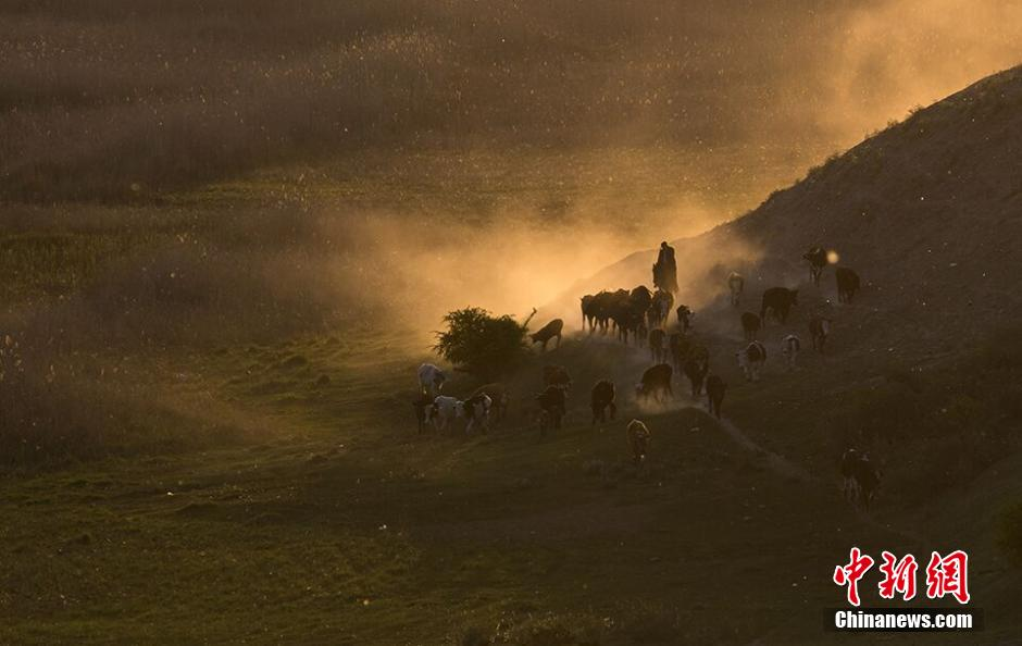 Dust clouds from a small herd of sheep catch the sun on a hillside in Xinjiang Ili Kazakh Autonomous Prefecture on April 26.