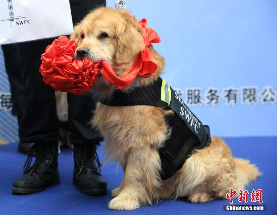 how to pass sniffer dogs