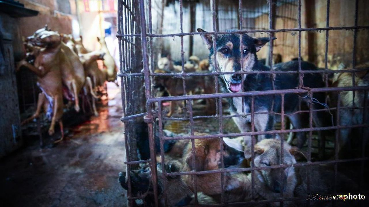 Yulin Dog Meat Festival brings mixed Chinese opinions