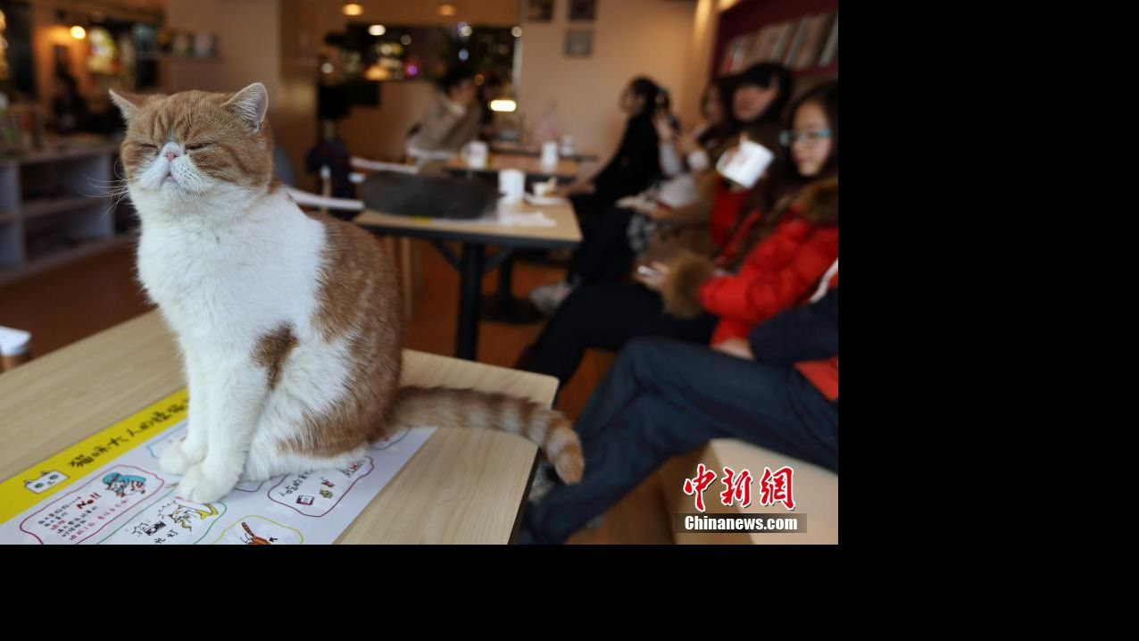 Cute cat mascot wanted to promote China's Singles' Day