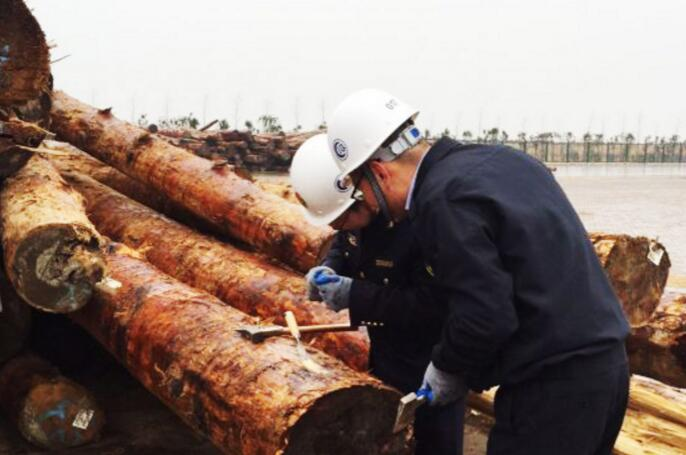 Dangerous invasive species found in China log shipment