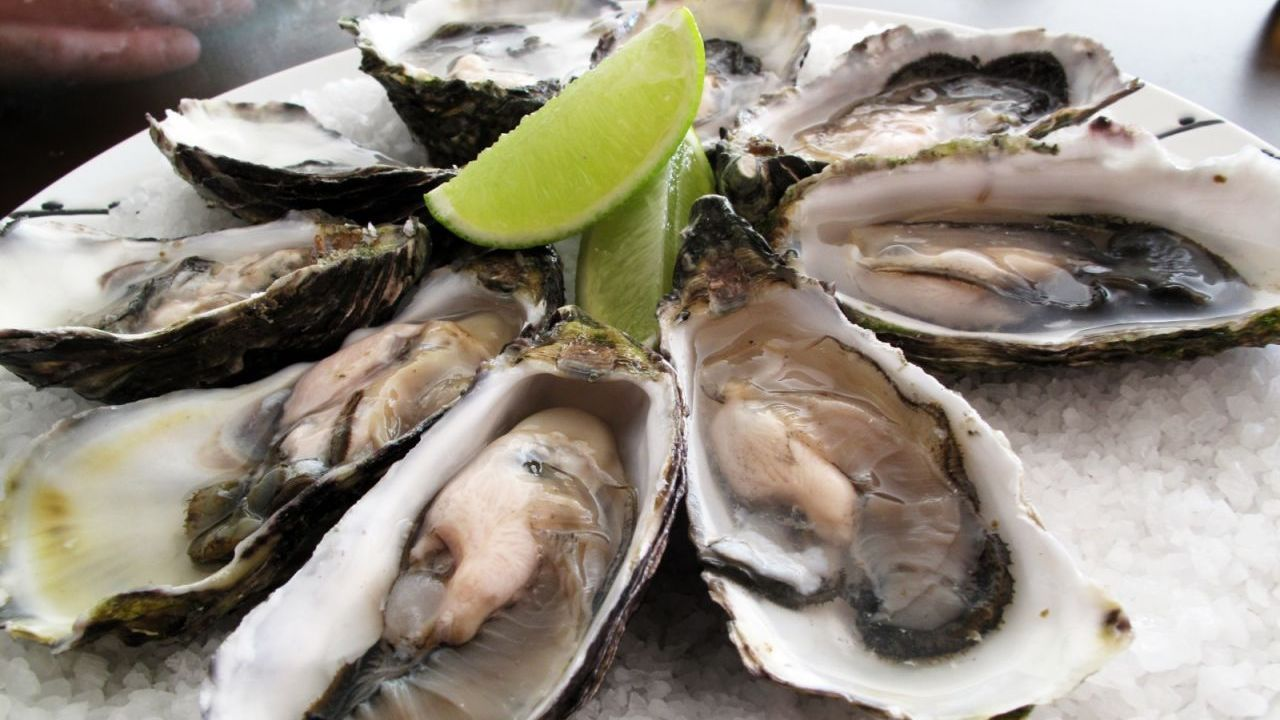 Chinese netizens hungry to help Denmark fight off oyster invasion