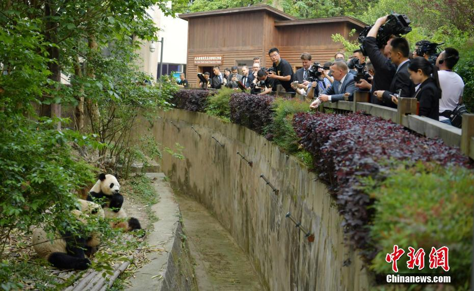 Danish Prime Minister Lars Rasmussen visited the Chengdu Research Base of Giant Panda Breeding in Sichuan Province on Tuesday and fed the giant panda there.