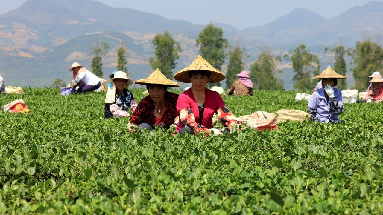 Ancient Chinese tea culture is a modern-day business