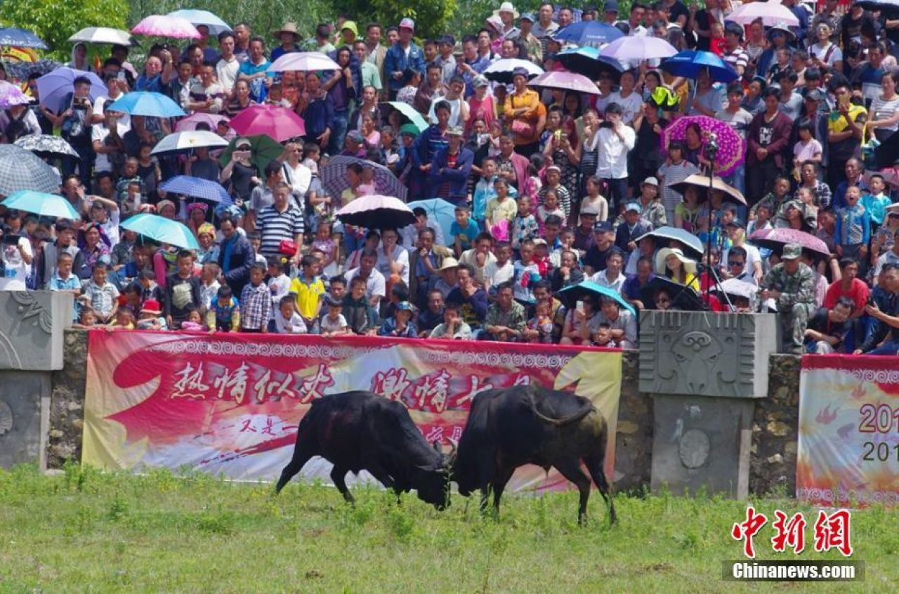 Bull fighting is also a popular aspect of the festival.