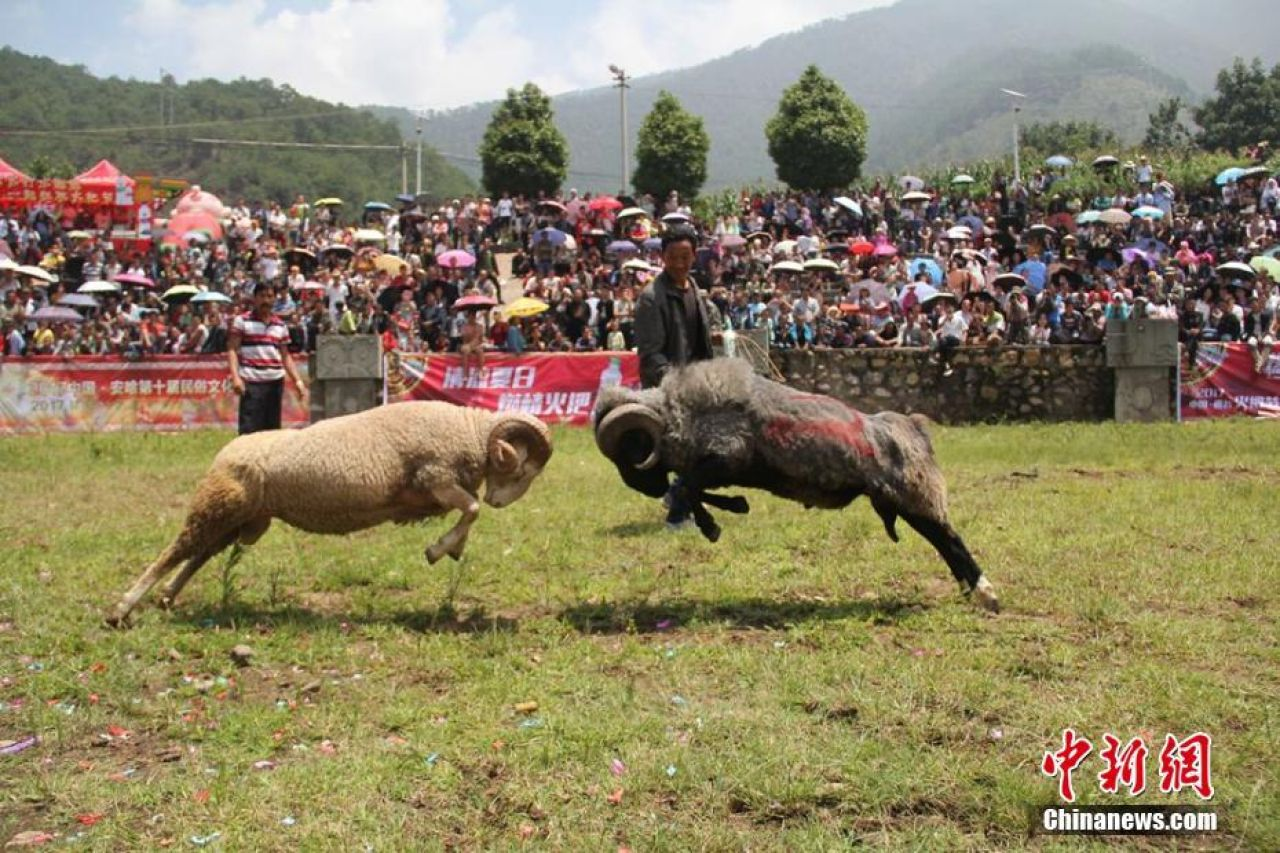 Goat fighting is a traditional activity during the celebrations.