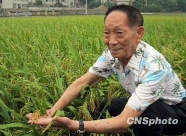 'Father of hybrid rice' nominated for Nobel Peace Prize