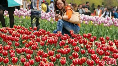 Booming interest in 'Cathay' tulip in China after First Lady's christening
