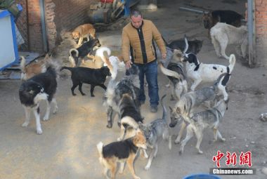 Man spends millions to save 2,000 dogs from slaughter