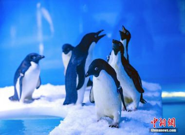Penguins date back 14,600 years according to Chinese scientists