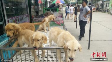 Largest dog market in North China to be closed down