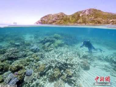 Australia hit Chinese firm with $92m reef repair bill
