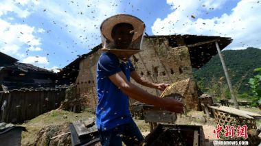 140 students, teachers stung by wild bees in northwest China