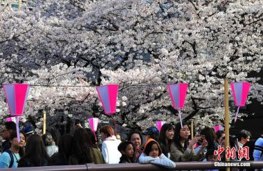 Japan becomes Chinese tourists' favoured destination