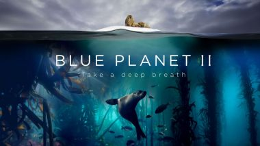 BBC's Blue Planet II named 'Highest Rated Documentary' at Chinese film awards