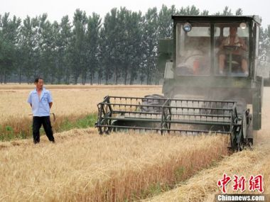 China steps up farmland protection as grain output falls
