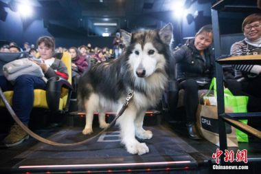 Cinema allows dog with eyesight problems to watch film