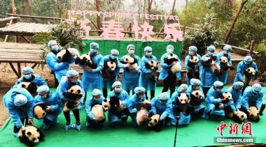 China to end inbreeding of giant panda