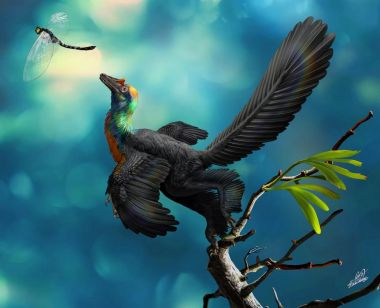 Feathered 'rainbow' dinosaur discovered in China