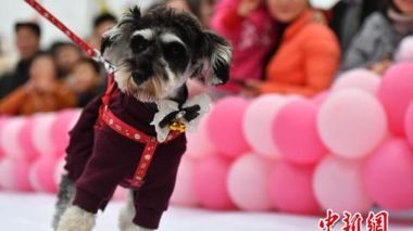 Spring Festival celebrations across China (in photos)