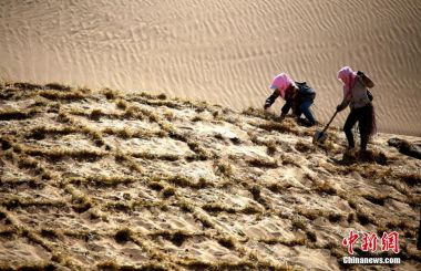 Grapes among methods used by China to combat desertification