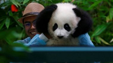 Baby panda makes public debut at Malaysia Zoo