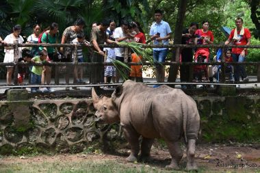 Rare rhinos begin journey from Nepal to China