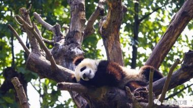 Global contest to name four giant panda cubs launched in China